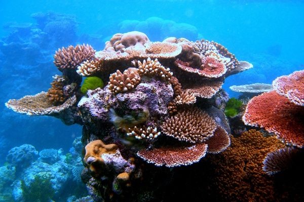 coral in reef