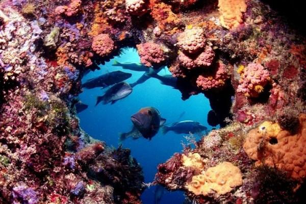 underwater tunnel