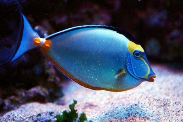 Underwater_Tropical_Fish