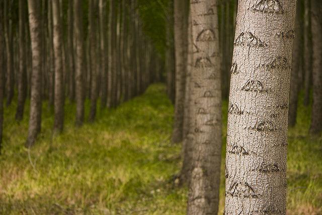 a_tree_from_boardman