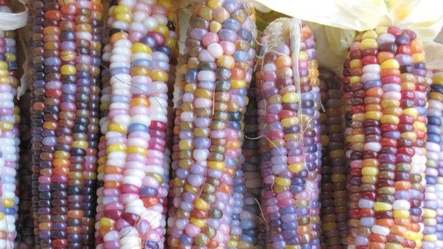 Colorful Glass Bead Corns_One