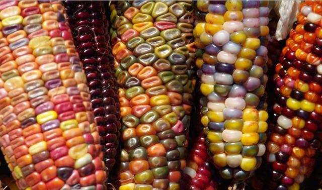 colorful glass corns