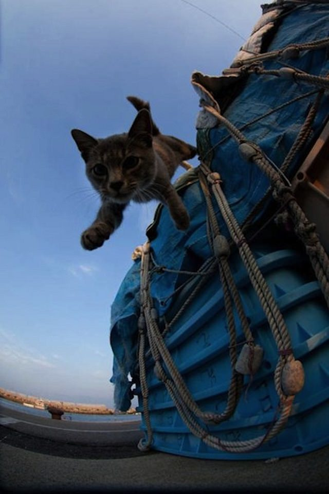 Cat Island 15