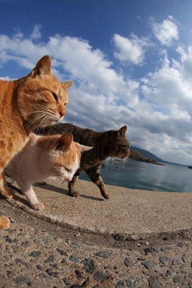 Cat Island 19