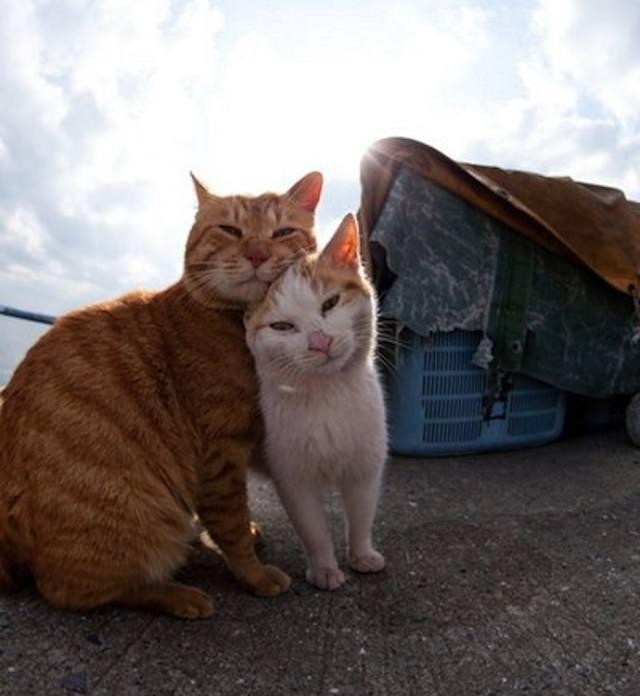 Cat Island 22