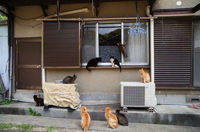 Cat Island 7