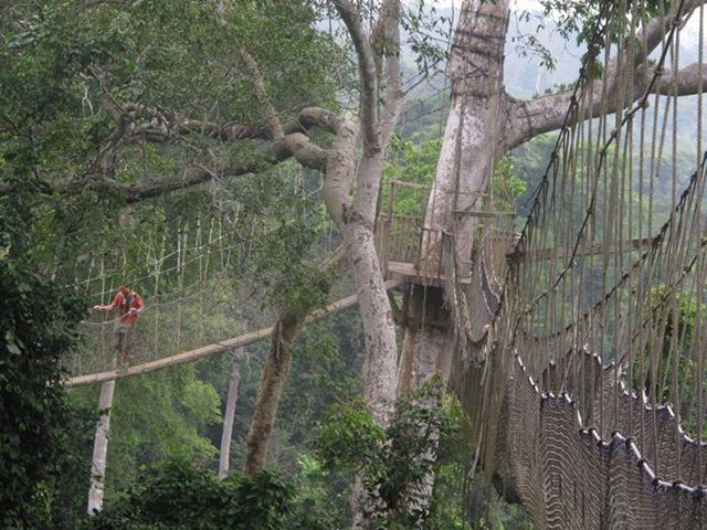 You can walk over the jungles of Kakum National Park over this rope bridge which is 300 meters long and forty meters high. The Canopy walk because glitch at some points and you will stumble upon surprising absence of rope patches and elevated oscillations