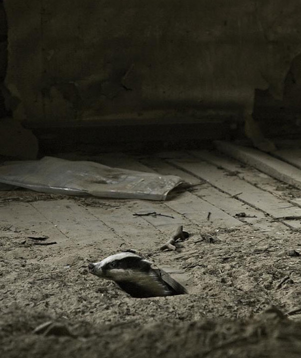 animals take over abondoned house  (10)