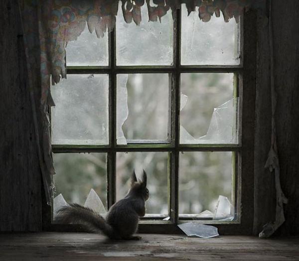 animals take over abondoned house  (3)