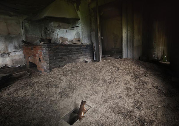 animals take over abondoned house  (8)