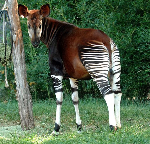 animals you have never seen before  (9)