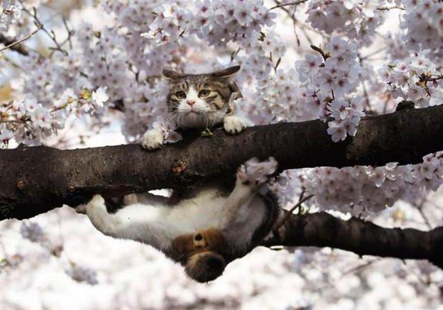cats are badasses (2)