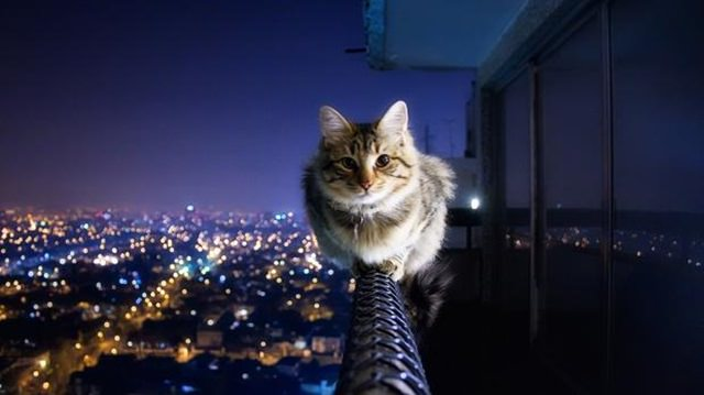 cats are badasses (4)