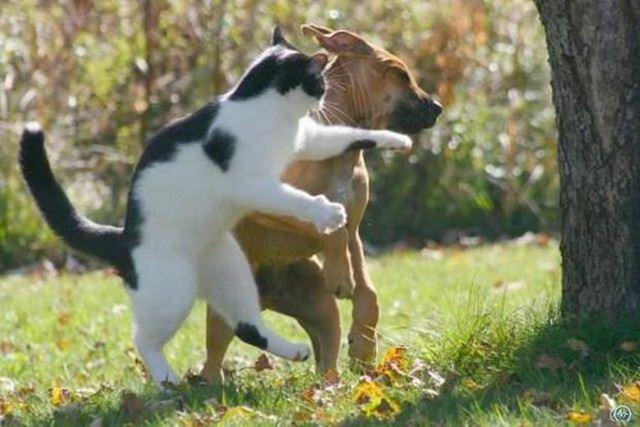 cats are badasses (5)