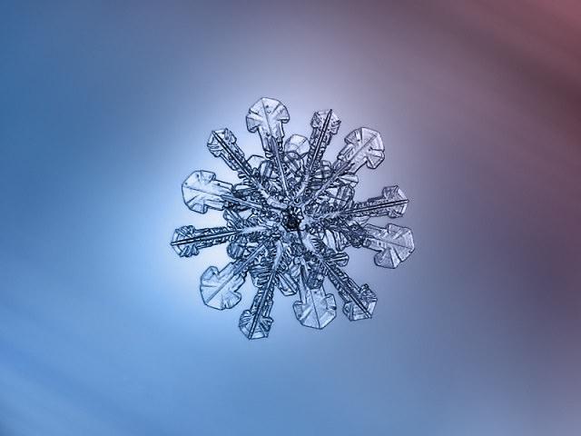 Snowflakes (24)