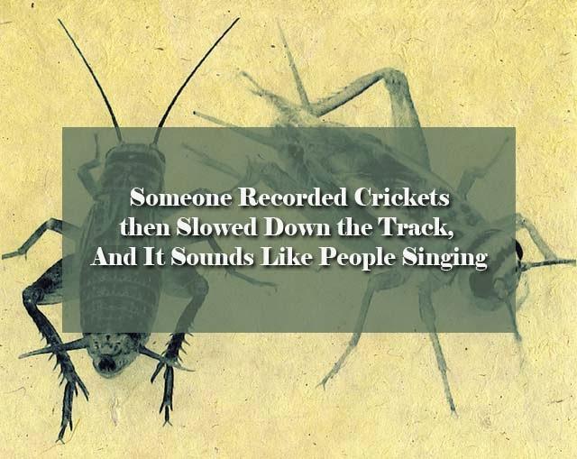 crickets_sound