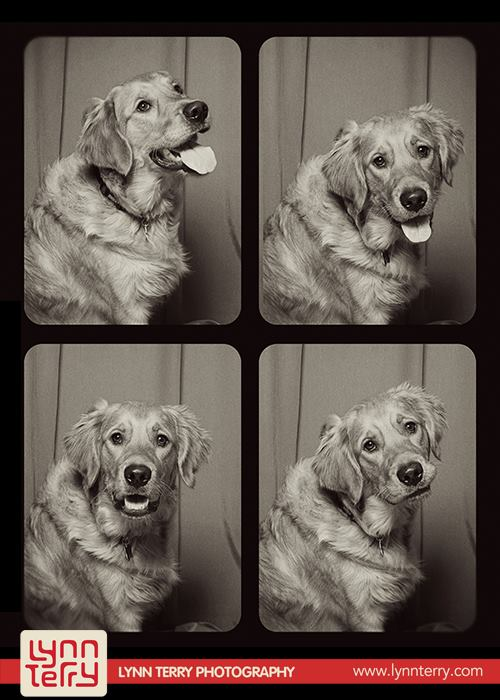 dogs_in_photo_booth (10)