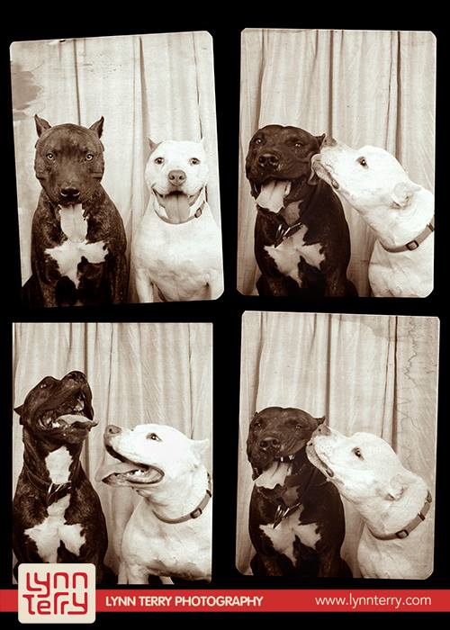 dogs_in_photo_booth (3)