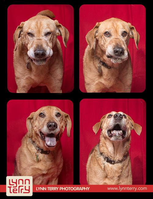 dogs_in_photo_booth (5)