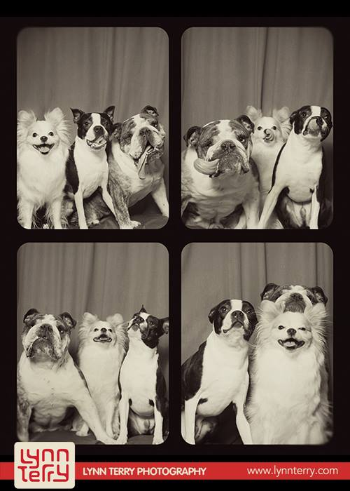 dogs_in_photo_booth (8)