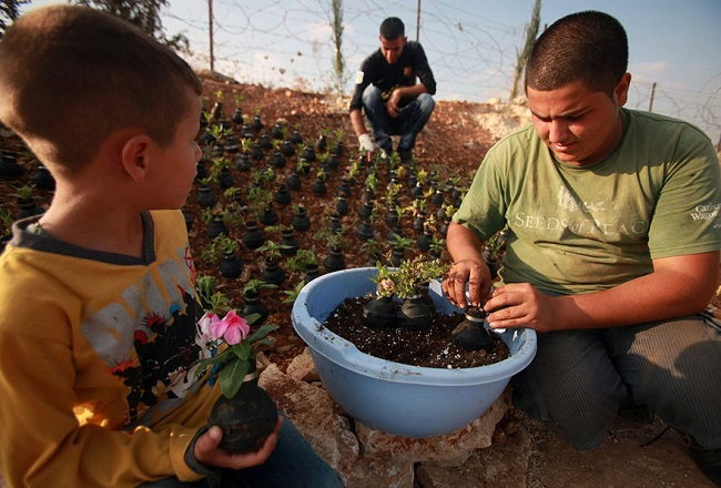 tear-gas-flower-pots-palestine