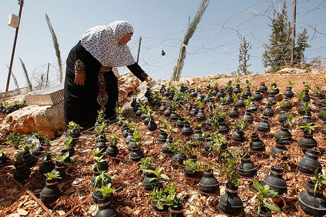 tear-gas-grenade-flower-pots-palestine-